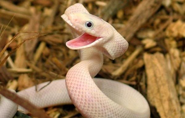 a-aaa-happy-snake
