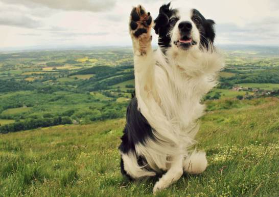 dog-waving-1